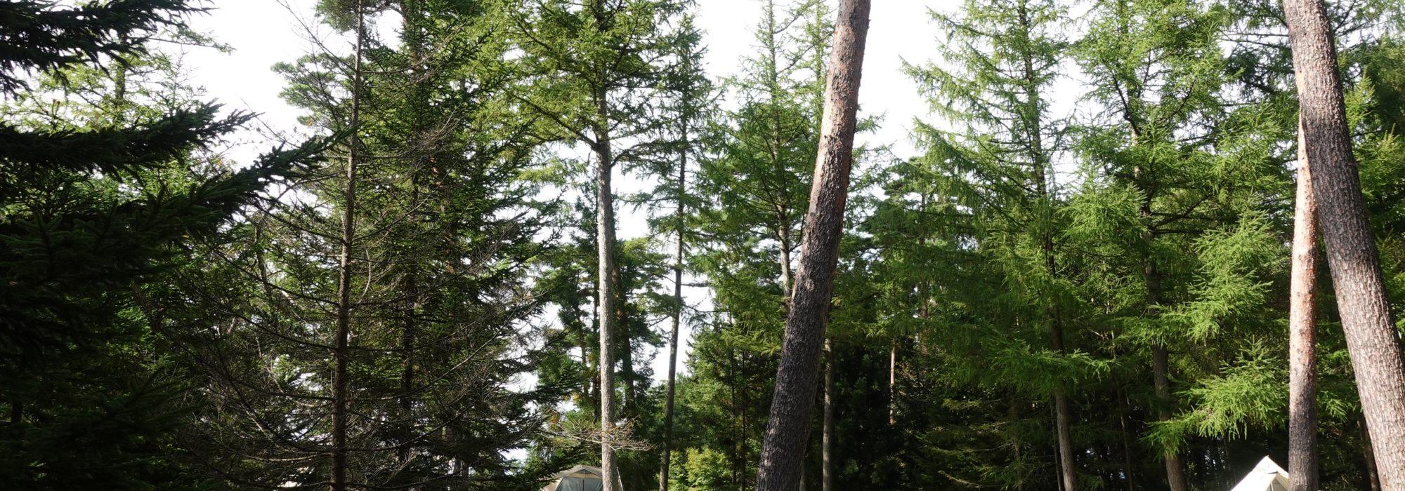 林間サイト